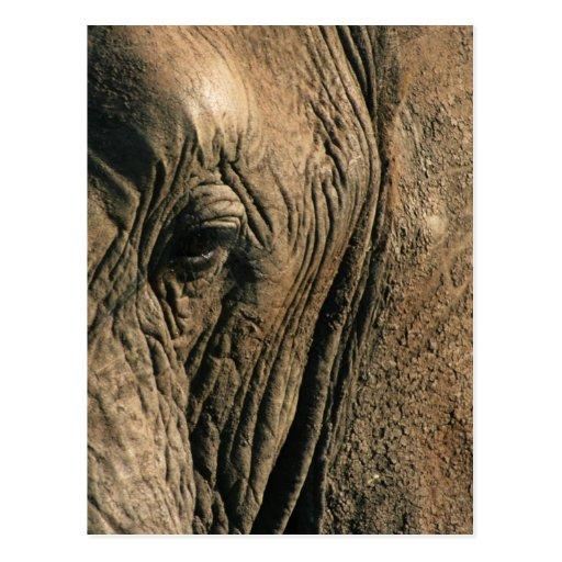 Nahaufnahme-Foto des Auges des afrikanischen Elefa Postkarte
