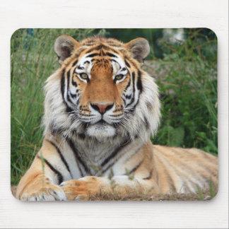 Nahaufnahme-Foto Hauptmousepad des Tigers schönes Mauspad