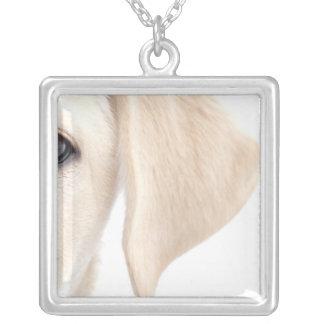 Nahaufnahme-halbes Gesicht von gelbem Labrador Versilberte Kette