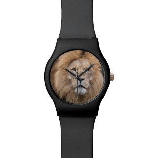 Nahaufnahme-Porträt eines männlichen Löwes Armbanduhr
