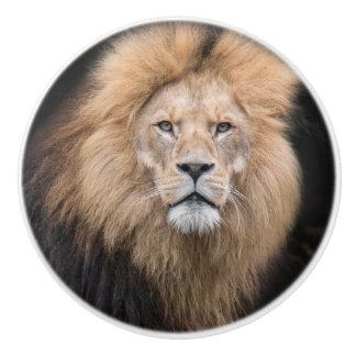 Nahaufnahme-Porträt eines männlichen Löwes Keramikknauf