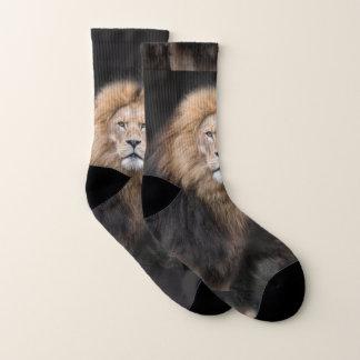 Nahaufnahme-Porträt eines männlichen Löwes Socken
