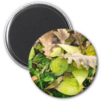 Nahaufnahmeansicht über gefallenes Herbst-Blätter Runder Magnet 5,7 Cm