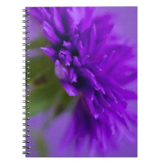 Nahaufnahmebild der Blume Aster auf lila backg Notizblock