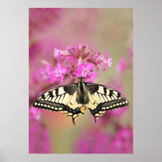 Nahaufnahmeschwalbenschwanzschmetterling auf lila poster