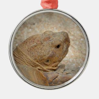 nahe hohe alte Hauptschildkröte der Schildkröte Silbernes Ornament