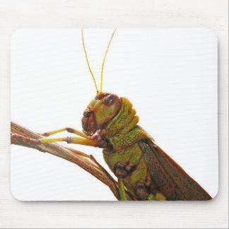 Nahe hohe Details der grünen Heuschrecke Mousepad