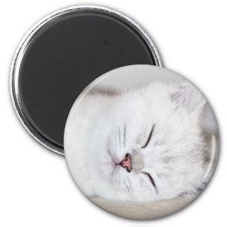 Nahe hohe junge weiße Katze sleeping.JPG Runder Magnet 5,7 Cm