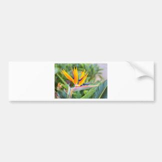 Nahe hohe Kran-Blume oder Strelitzia reginaei Autoaufkleber