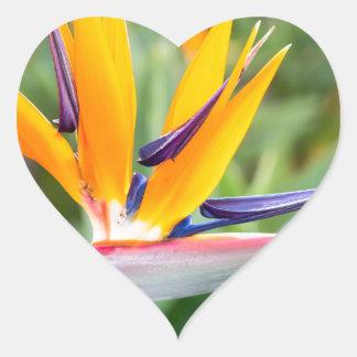 Nahe hohe Kran-Blume oder Strelitzia reginaei Herz-Aufkleber