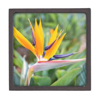 Nahe hohe Kran-Blume oder Strelitzia reginaei Kiste