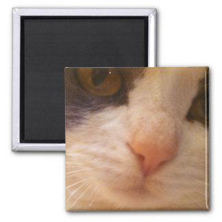 Naher hoher Katzen-Magnet Quadratischer Magnet