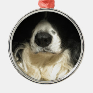 Nahes hohes der Nase des Hundes Rundes Silberfarbenes Ornament