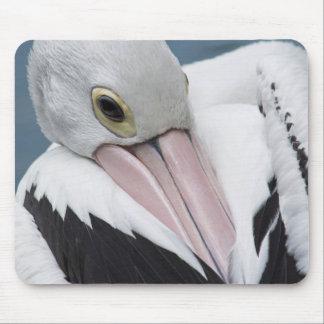 Nahes hohes des australischen Pelikans Mauspads