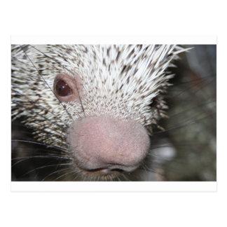 Nahes hohes des Stachelschweins Postkarte