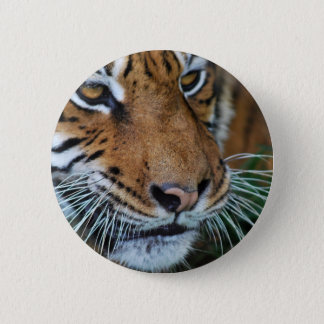 Nahes hohes des Tigers Runder Button 5,7 Cm