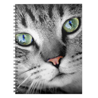 Nahes hohes Katzen-Foto Spiral Notizblock