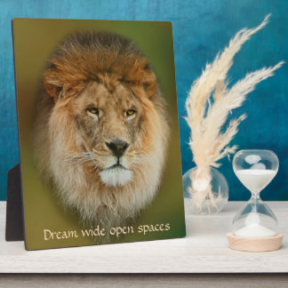 Nahes hohes majestätischen Löwes Südafrikas Fotoplatte