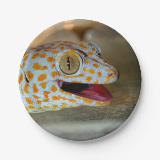 Nahes hohes Porträt von Tokay Gecko in TulaZoo Pappteller