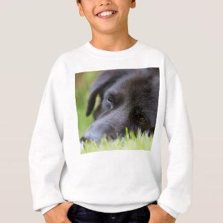 Nahes hohes schwarzes altes Hundegesicht mit Sweatshirt