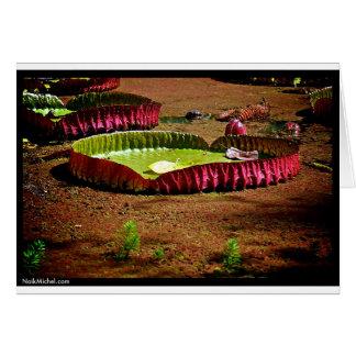 Naik Michel Fotografie Hawaii 007 Karte
