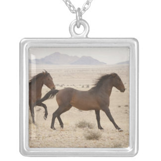 Namibia, Aus. Wilde Pferde, die auf das Namib Versilberte Kette
