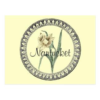 Nantucket Narzissen-Parade Postkarte