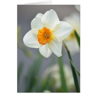 Narzissen-Blume Karte