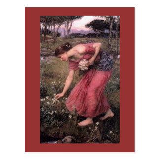 Narzissen-Sammeln-Blumen in der Wiese Postkarte