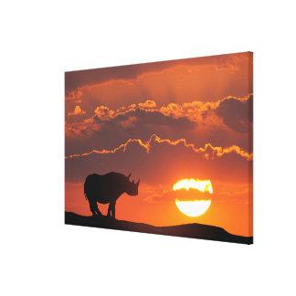 Nashorn am Sonnenuntergang, Masai Mara, Kenia Leinwanddruck