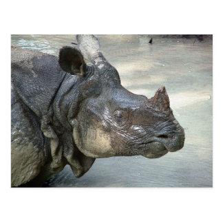 Nashorn Postkarte