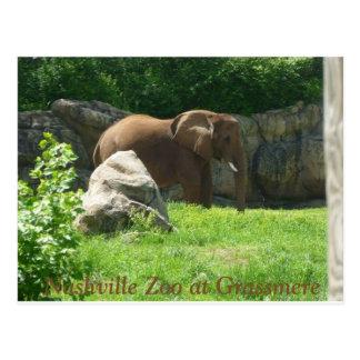 Nashville-Zoo-Postkarte Postkarte
