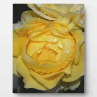 Nasse gelbe Rose Fotoplatte