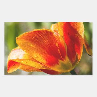 Nasse orange und gelbe Tulpe Rechrteckaufkleber