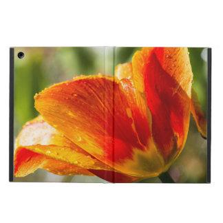 Nasse orange und gelbe Tulpe