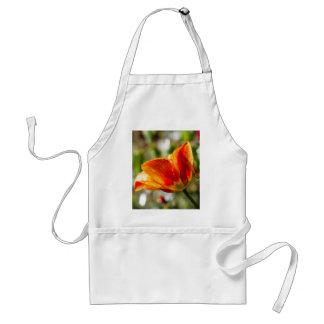 Nasse orange und gelbe Tulpe Schürze