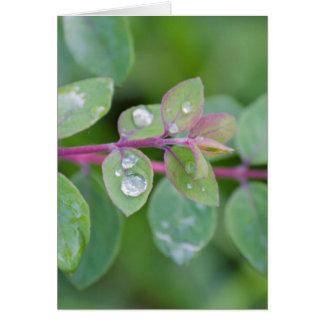 nasses Blatt im Garten Karte