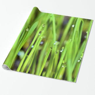Nasses Gras mit Regentropfen-Packpapier Geschenkpapier