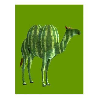 Nationaler Wassermelone-TagesDromedary Postkarte