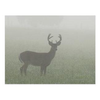 Nationalpark Great Smoky Mountains, Tennesse, Postkarte