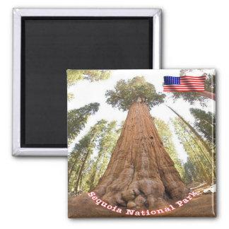 Nationalpark-Mammutbaum US USA - General Sherman Quadratischer Magnet
