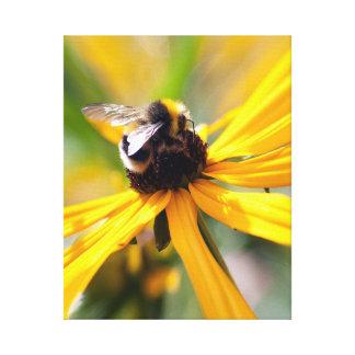 Natur-Bienen-Nektar-Gelbgänseblümchen Leinwanddruck