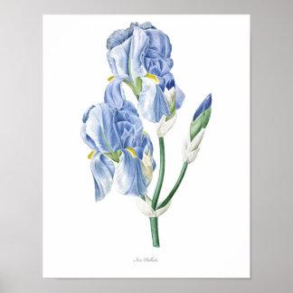 Natur, botanischer Druck, Blumenkunstplakat von Poster