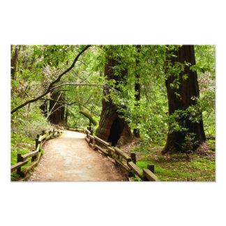Natur-Fotografie des Muir Holz-Weg-II Fotodruck