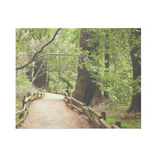 Natur-Fotografie des Muir Holz-Weg-II Galerieleinwand