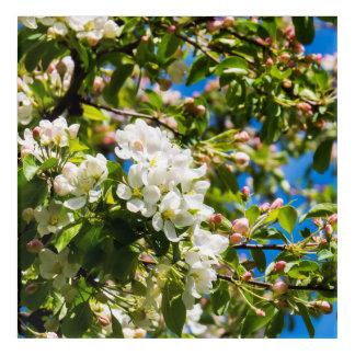 Natürliche Blumen in einem Baum Acryldruck