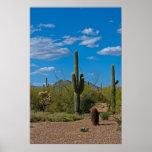 Natürliche Kaktus-Landschaft 3994 Poster