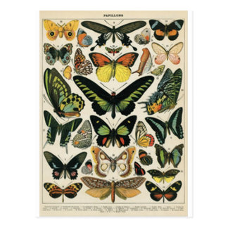 Natürlicher History Butterfly Postkarten