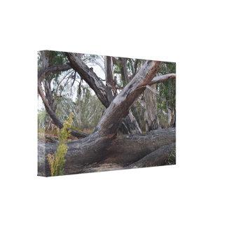 Natürliches Australien, die gefallenen Klotz, Leinwanddruck