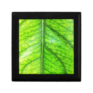 natürliches grünes Blatt verlässt Baum-Erde schöne Erinnerungskiste